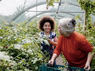 Trädgårdsarbete med seniorer