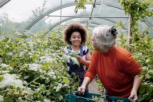 Plantación de niños en invernadero