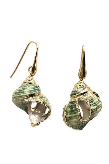 Orecchini in Argento 925 con conchiglie verdi originali dei Caraibi