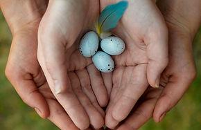 Eggs In Hands 000008058201.jpg