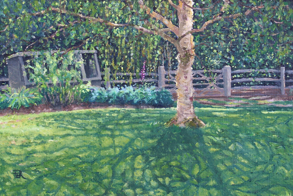 Birch Tree Shadows by the Potting Shed