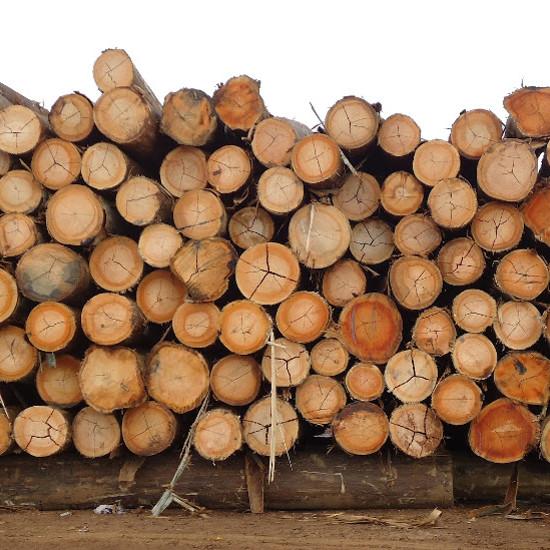 escoras-de-eucalipto-11