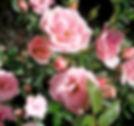 Rosenölprodukte aus Kazanlak