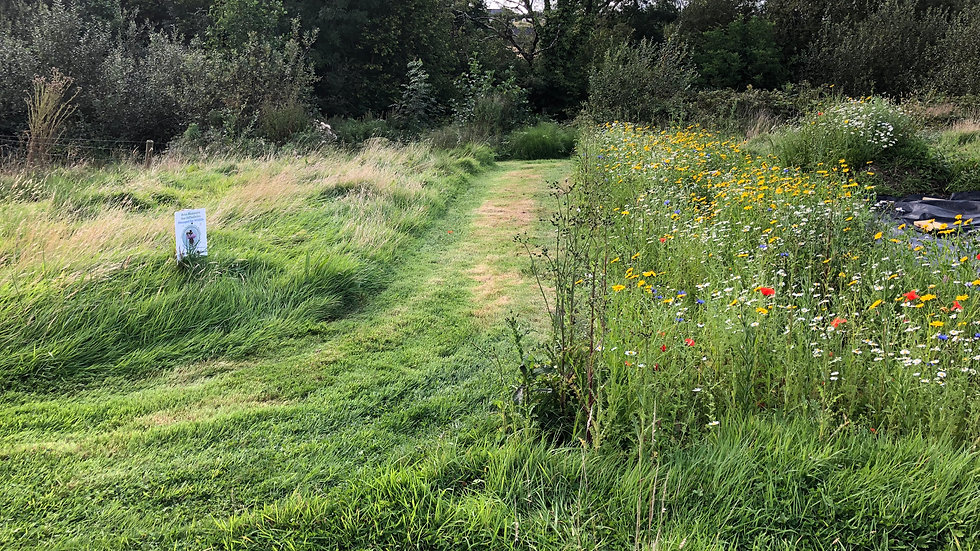 Our Meadow and Wildflower Projects