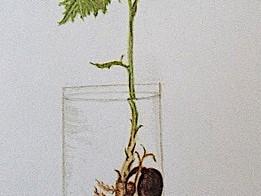 "Art Challenge 4 - ""New Growth"""