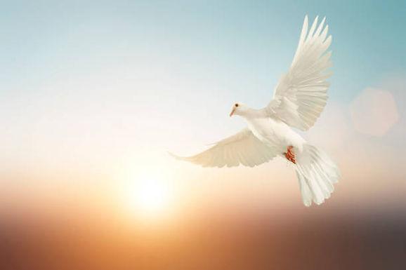 Özgürlüğün Adı: Beyaz Güvercin