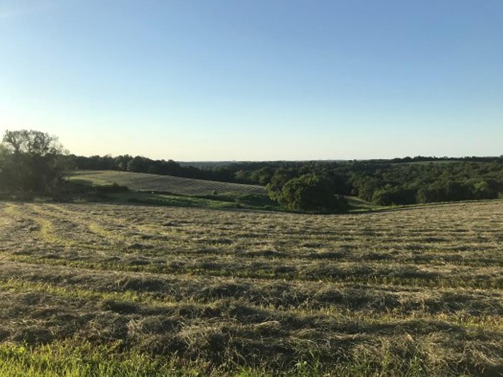 Our farm, 2018.