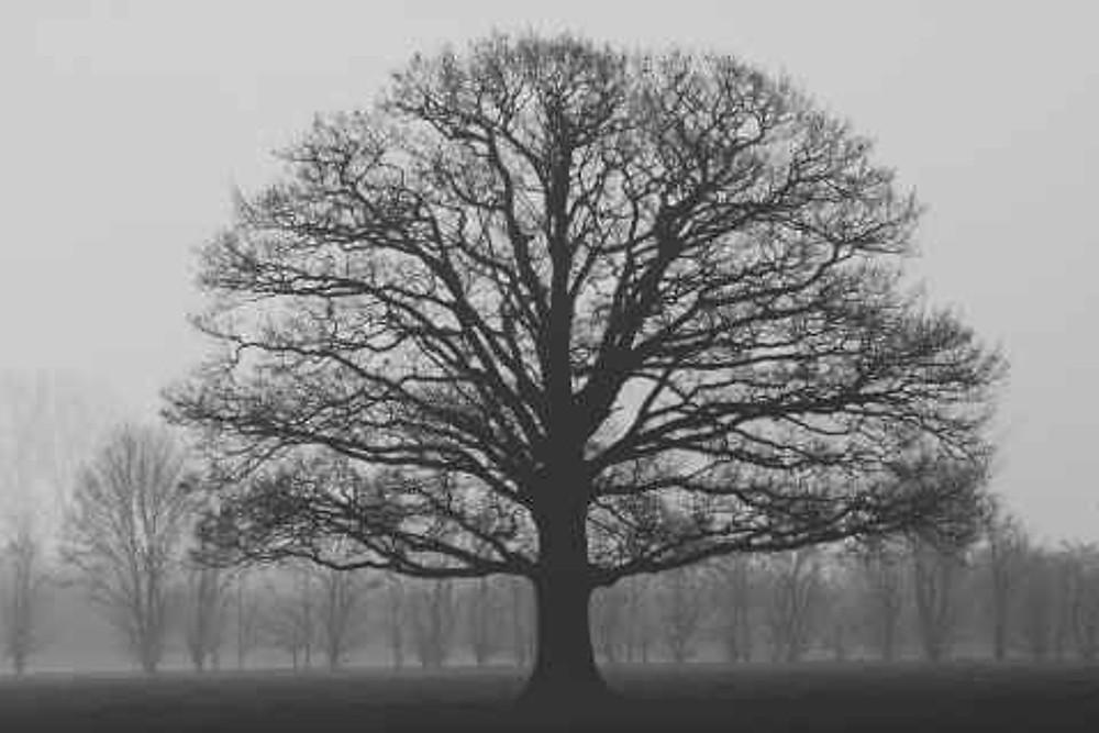 Tree | Image courtesy of Pexels