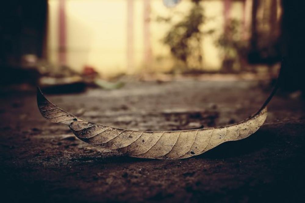 Leaf | Image courtesy of Pixabay.