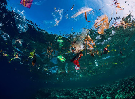 Why It's More Important Than Ever to Protect our Seas