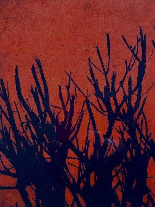 'Edge XII (Orange)'