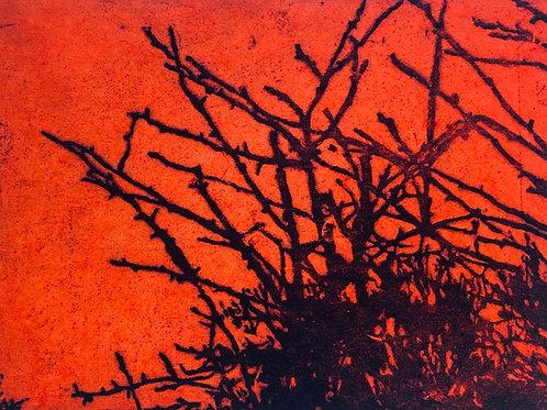 Edge XI (orange)