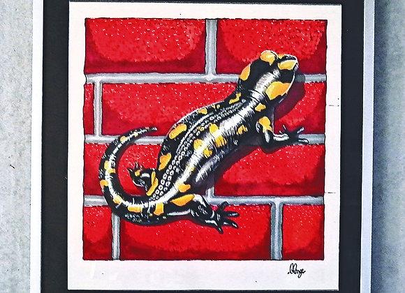 Grande Salamandre