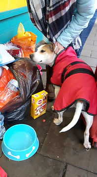 Homeless dog 3