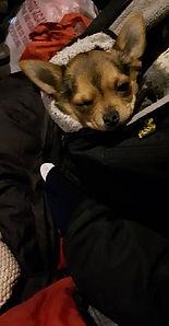 Homeless dog 1