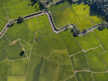 Drone Over Paddy Fields