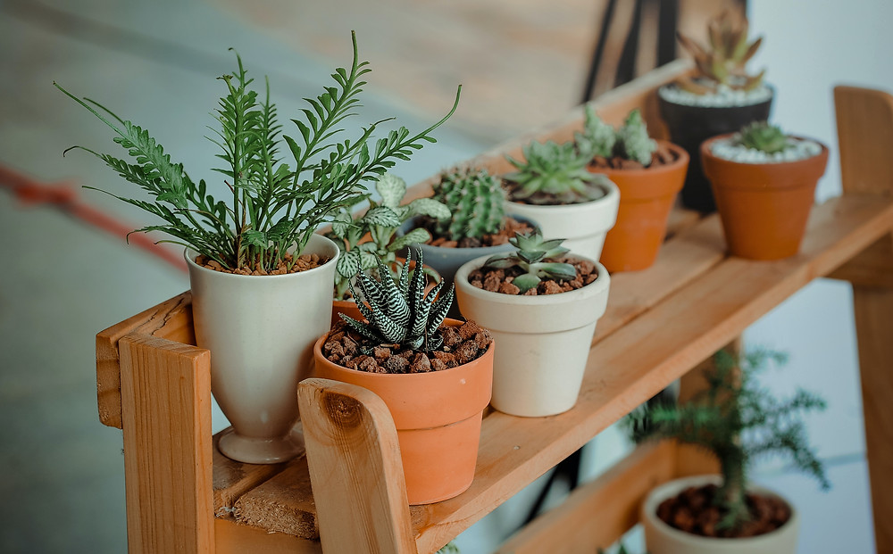 Low-waste wedding ideas - Plants in pots