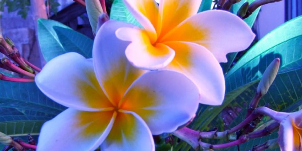 Sensibilisation aux 5 Éléments et Chakras - Sur 1 Journée - REPORTÉE (1)
