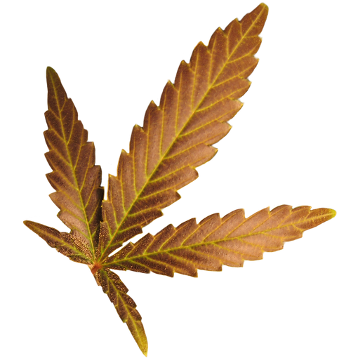 Hemp Leaf.PNG