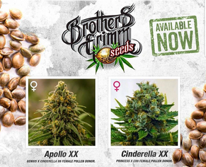 New Brothers Grimm Feminized Seed Release