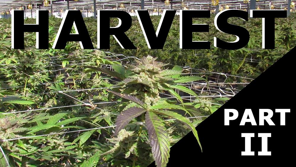 California Recreational Cannabis Farm