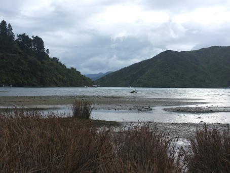 1. Whatamango Bay Camping Area