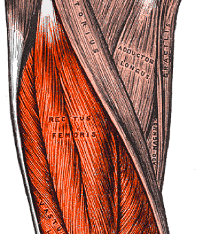 Common Cause of Knee pain in Athletes (Runner's Knee)