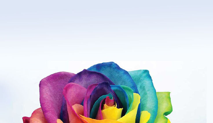 International-Day-against-Homophobia-and