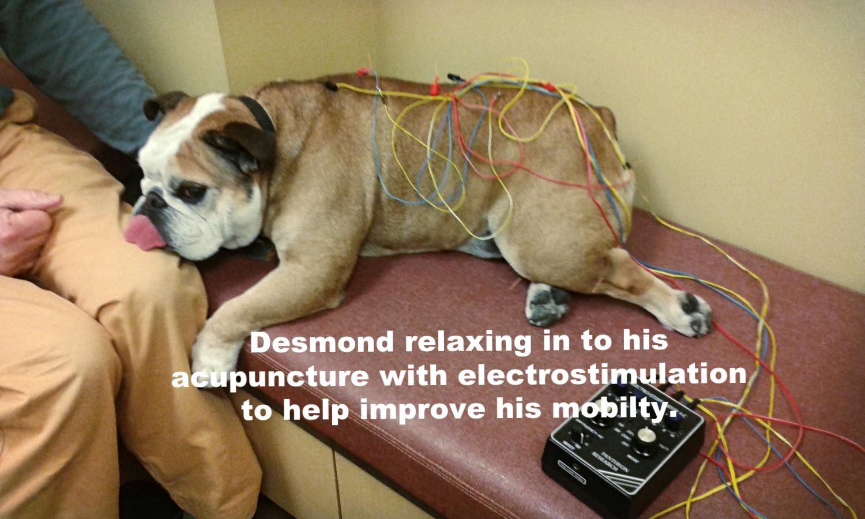 Desmond Pic_edited