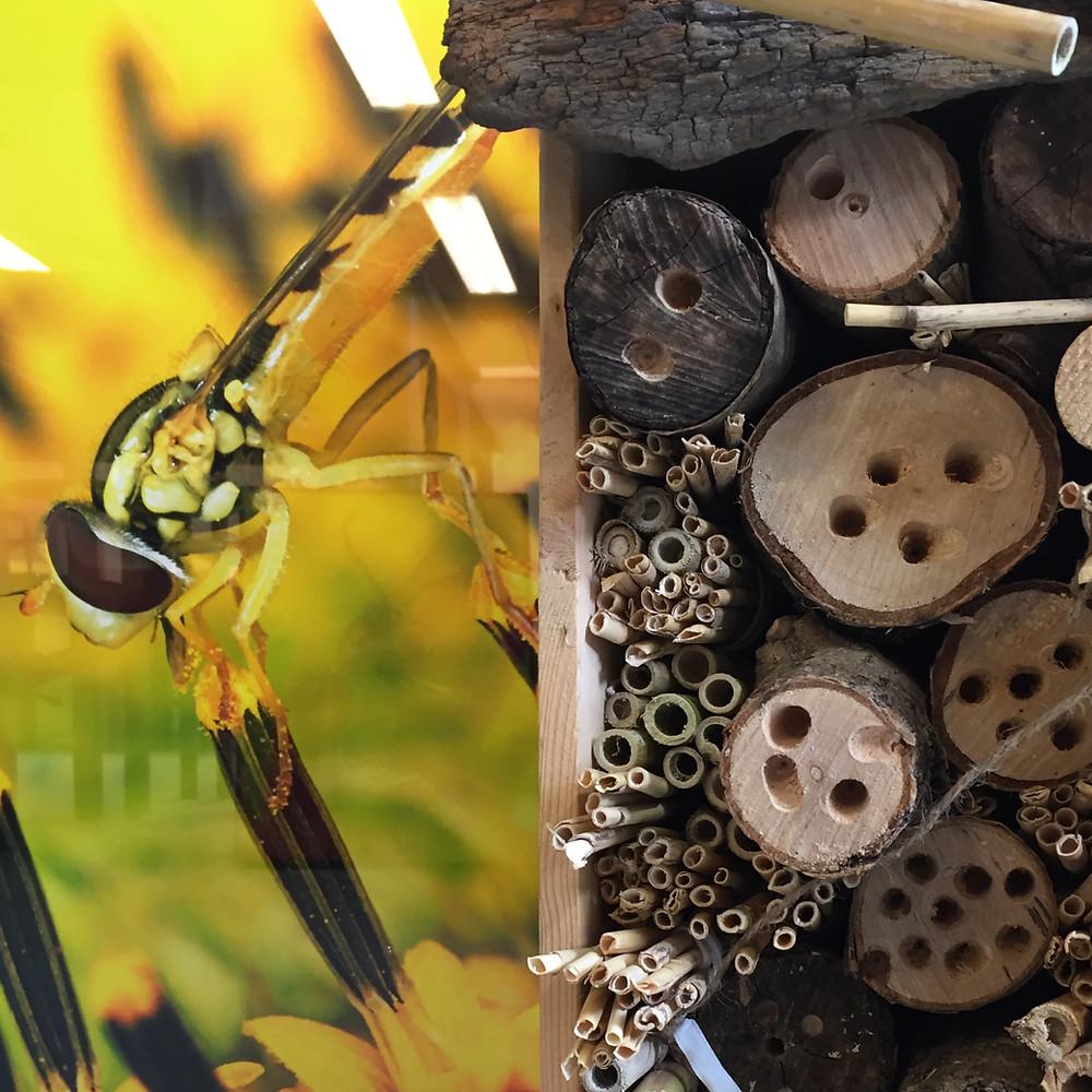 Fotografi i bakgrunnen av Carll Goodpasture - insekts hotellet er plassert foran bildet. Foto: Janne Lepperød