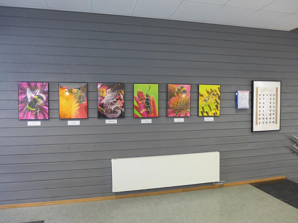 'Hvis biene forsvinner...' utstilt ved hovedinngangen. Foto: Kunst i Skolen