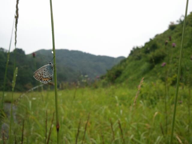 15.07.08_uchi3.jpg