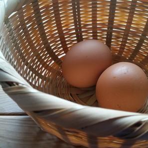 An Egg is not just an Egg