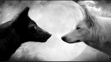 Loup noir et Loup blanc,                             le combat intérieur