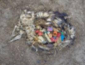 bird plastic stomach.jpg