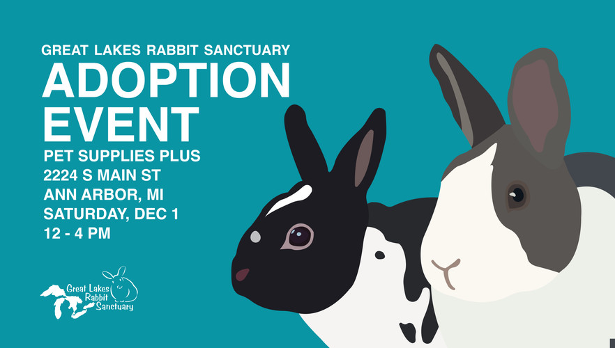 December Adoption Event