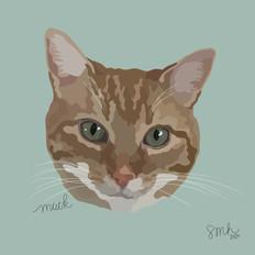 Portrait | Mack