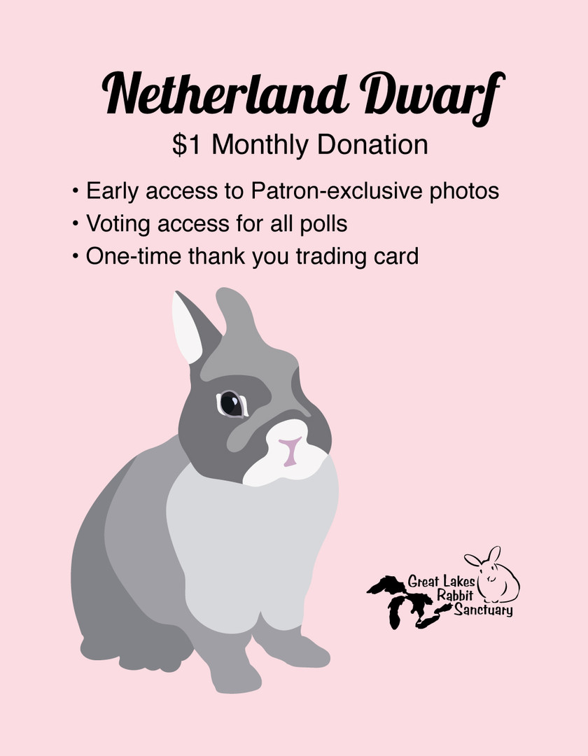 Patreon Reward - Netherland Dwarf