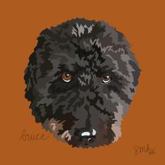 Portrait | Bruce