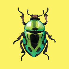 Illustration | Low-Poly Beetle