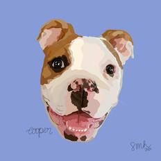 Portrait | Cooper