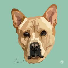 Portrait | Hannah