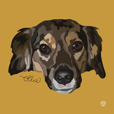 Portrait | Ollie