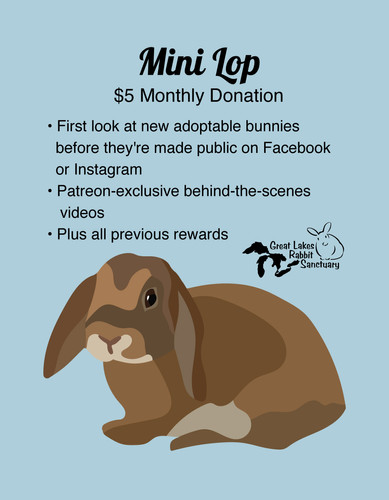 Patreon Rewards - Mini Lop