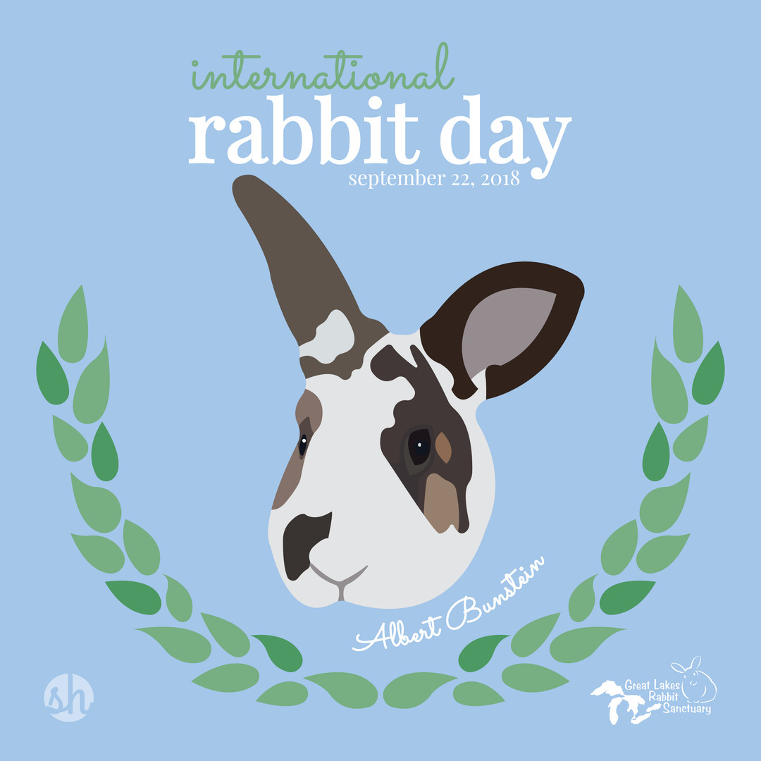 International Rabbit Day - Albert