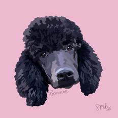 Portrait | Bonnie