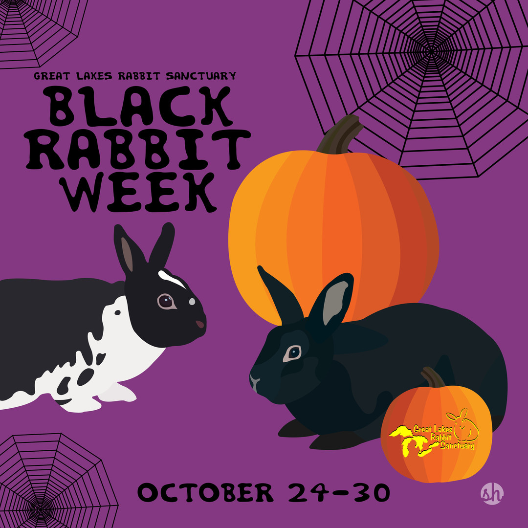 Black Rabbit Week