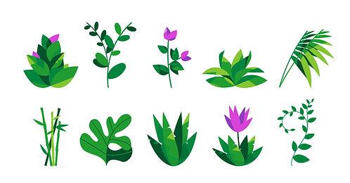 PM Plants Set