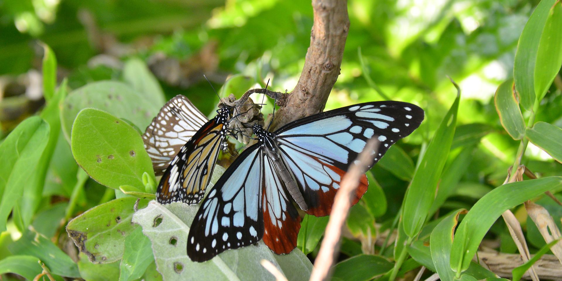 カラフルな蝶たち