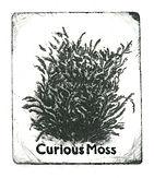 Curious Moss logo